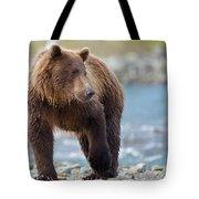 Coastal Brown Bear Tote Bag