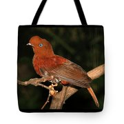 Female Cock Of The Rock Tote Bag
