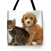 Cockapoo Puppy And Tabby Kitten Tote Bag