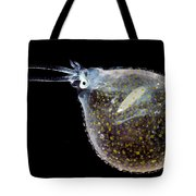 Cockatoo Squid Tote Bag