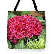 Cockscomb Flower Tote Bag