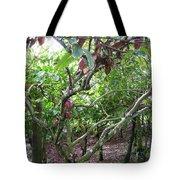 Cocoa Tree With Ripe Cocoa Pods Tote Bag