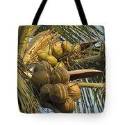 Coconuts Cluster At Los Tules Resort Tote Bag