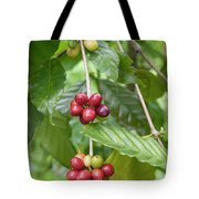 Coffea Coffee Growing In The Balinese Countryside. Tote Bag