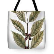 Coffee Plant, 1735 Tote Bag