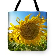 Colby Farms Sunflower Field Newbury Ma Ball Of Fire Tote Bag