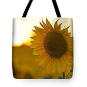 Colby Farms Sunflower Field Newbury Ma Closeup Sunset Tote Bag