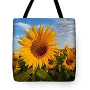 Colby Farms Sunflower Field Newbury Ma Sunrise Tote Bag