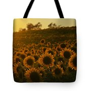 Colby Farms Sunflower Field Newbury Ma Sunset Tote Bag