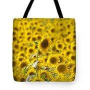 Colby Farms Sunflower Field Newbury Ma Tote Bag