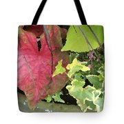 Coleus And Ivy Tote Bag