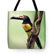Collared Aracari Pteroglossus Tote Bag