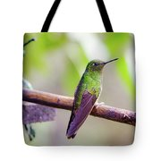 Colombian Hummingbird Tote Bag