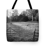 Colonial Sheep In Pasture Tote Bag