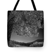 Colorado Aspen Black And White Tote Bag by Dave Dilli