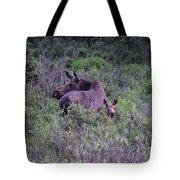 Colorado Moose  Tote Bag