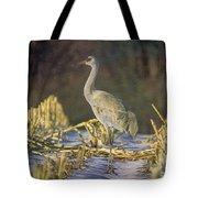 Colorado Sandhill Crane  Tote Bag