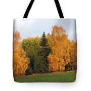 Colorful Autumn - Trees In Autumn Tote Bag