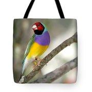 Colorful Gouldian Finch Tote Bag