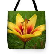 Colorful Lily Dew Drops Tote Bag