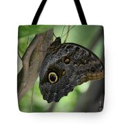 Colorful Markings On A Blue Morpho Butterfly On A Tree Trunk Tote Bag
