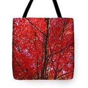 Colorful Red Orange Fall Tree Leaves Art Prints Autumn Tote Bag