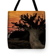 Colorful Roots Tote Bag