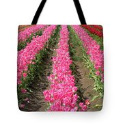 Colorful Rows Of Tulips Tote Bag