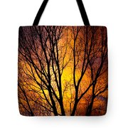 Colorful Tree Silhouettes Tote Bag