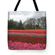 Colorful Tulips Blooming At Tulip Festival Tote Bag