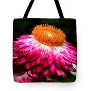 Colors Of Nature - Grand Opening 002 Tote Bag