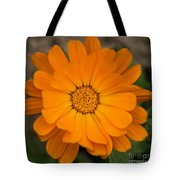 Colourful Orange Signet Marigold  Tote Bag