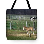 Colt Play With Hay Tote Bag