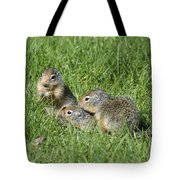 Columbian Ground Squirrels Tote Bag