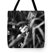 Columbine Flower 2 Black And White Tote Bag