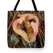 Columned Stinkhorn Mushroom - Outer Banks Nc Tote Bag