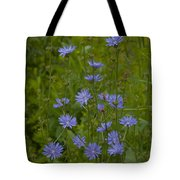Common Chicory Wildflowers #1 Tote Bag