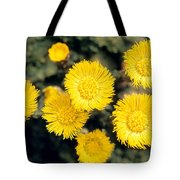 Common Coltsfoot  Tote Bag