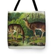 Common Deer Tote Bag