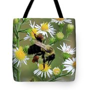 Common Eastern Bumblebee  Tote Bag