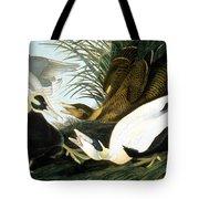 Common Eider, Eider Duck Tote Bag