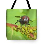 Common Fly Licking Up Aphid Nectar     May         Indiana    Tote Bag