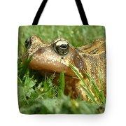 Common Frog Rana Temporaria Tote Bag