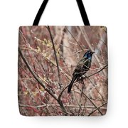 Common Grackle In Spring Tote Bag
