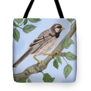 Common House Sparrow Tote Bag