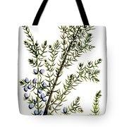 Common Juniper Alchemy Plant Tote Bag