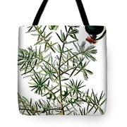 common juniper, Juniperus communis Tote Bag