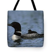 Common Loon Gavia Immer, With Baby Tote Bag