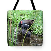 Common Moorhen And Chick Tote Bag