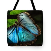 Common Morpho Blue Butterfly Tote Bag